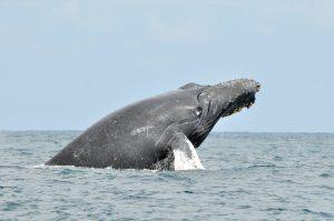 Kroatien – Wale bald die neue Attraktion?